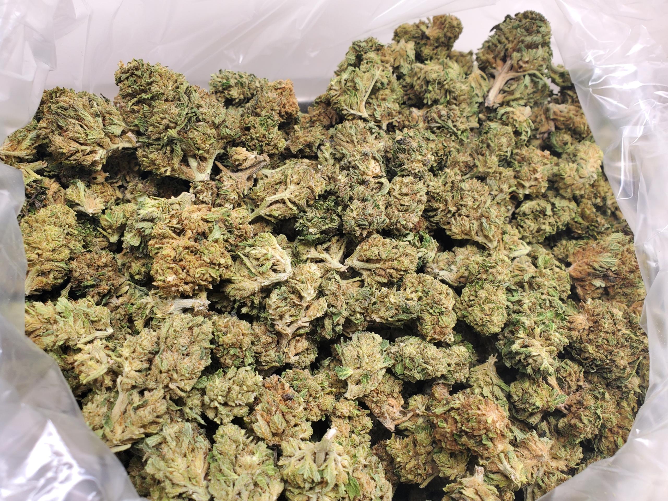 Cbd Hemp Flower 1 Lb Super Lemon Haze Rhizo Sciences Hemp Extracts For Sale Thc Free Cbd Oil Distillate Isolate 99 Cannabinoids Cbg Cbda Cbga Cbc Cbdv Thcv Thcp D8 Cbn Rhizo Sciences